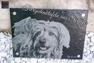 Hundebild auf einem Tiergrabstein, Tiergedenkstein