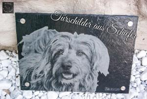 Hundebild auf einem Tiergrabstein, Tier-Gedenkplatte von Bella
